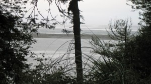A peak at the Pacific Ocean through the trees.