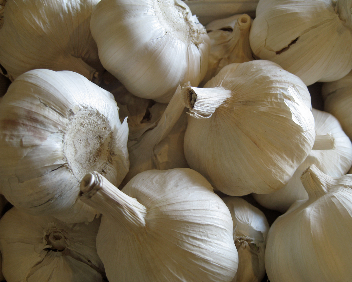 garlic-white1